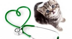 Cat stethoscope