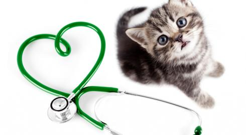 Searching Animal Clinics in Your Locality is The Most Essential Process For The Pet House owners