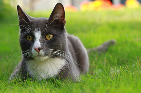 General Image - Cat in Grass4